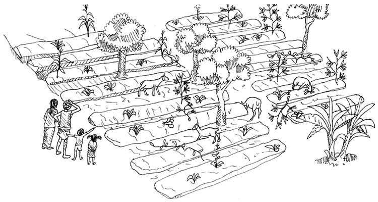 Permaculture 1 of 3